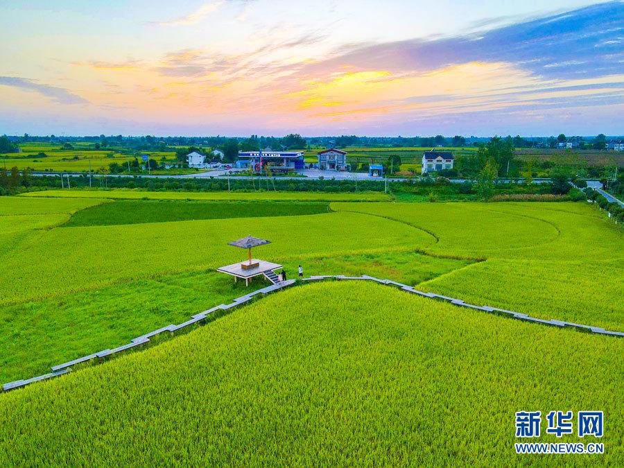 走进乡村看小康丨村庄整洁田园美 人居环境大变样