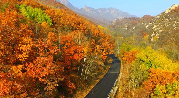 航拍京郊原始森林秋日層林盡染 山林披上絢麗外衣