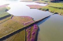 航拍鄱陽湖畔花紅草綠