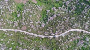 廣西蒲廟:花開引客來