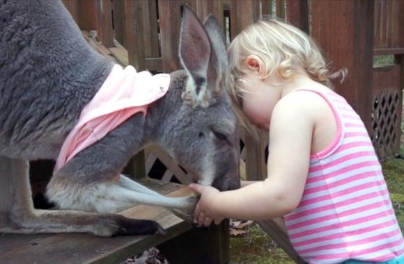 美國小姐弟與袋鼠一起長大 相親相愛畫風好暖