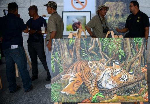 馬來西亞將加強打擊偷獵馬來虎行為