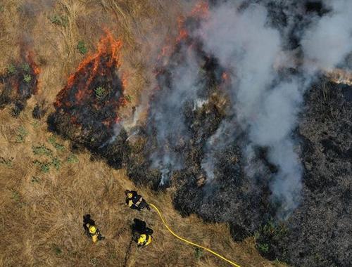 美國:預測稱今年加州野火頻發 當地舉行消防演習