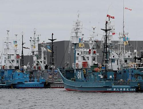 日本正式退出國際捕鯨委員會 重新開始商業捕鯨