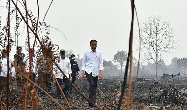 印尼森林火災持續 總統佐科前往視察