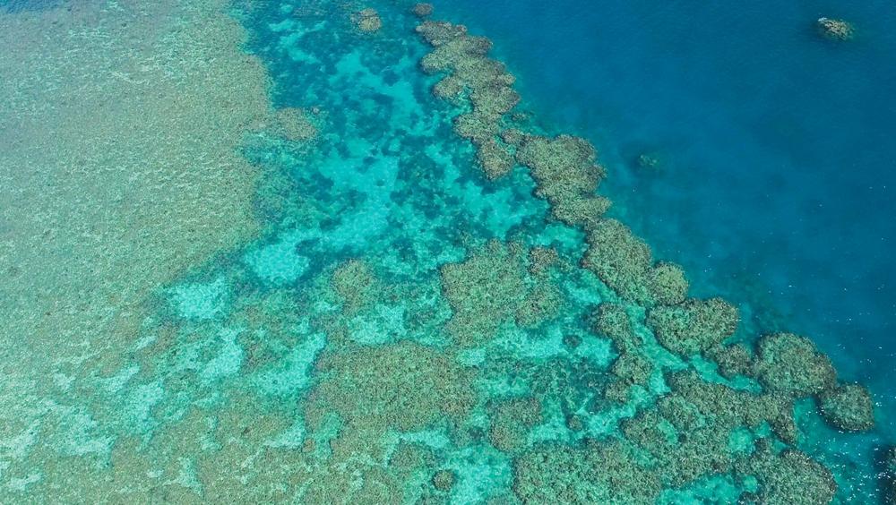 世界海洋日:關注澳大利亞大堡礁