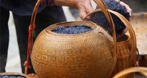 貴州黎平:侗寨烏米飯飄香