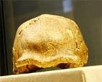 北京人頭蓋骨