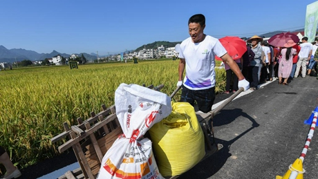 Sports event themed on paddy field held in China's Zhejiang