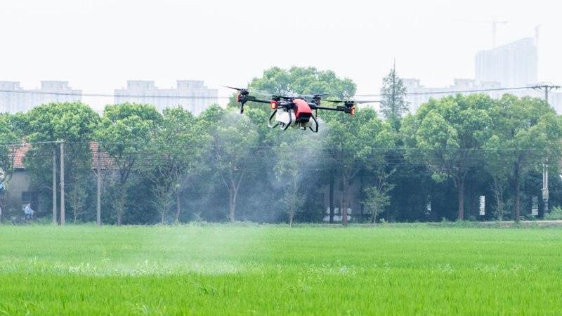 Across China: Shanghai's unmanned farm starts harvest