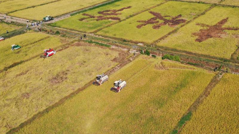 Chinese farmers embrace harvest festival