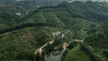 China's first forest carbon sink bonds issued