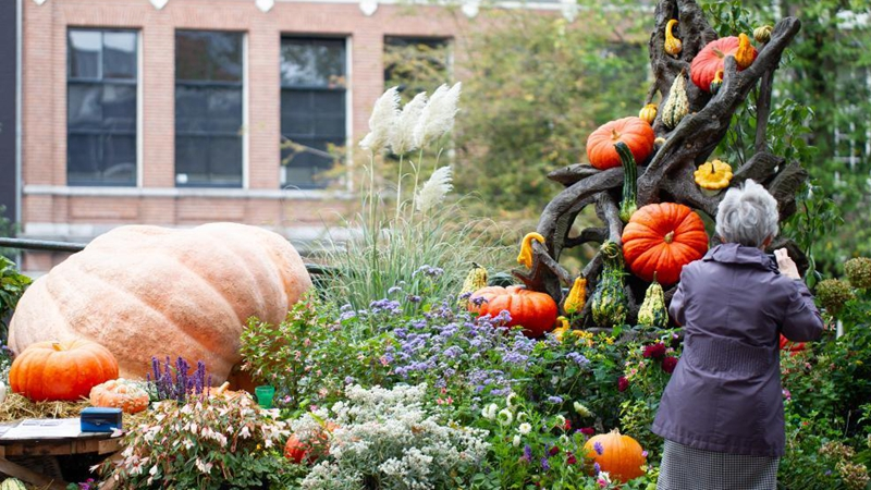 In pics: neighborhood garden with 80 pumpkins in central Amsterdam