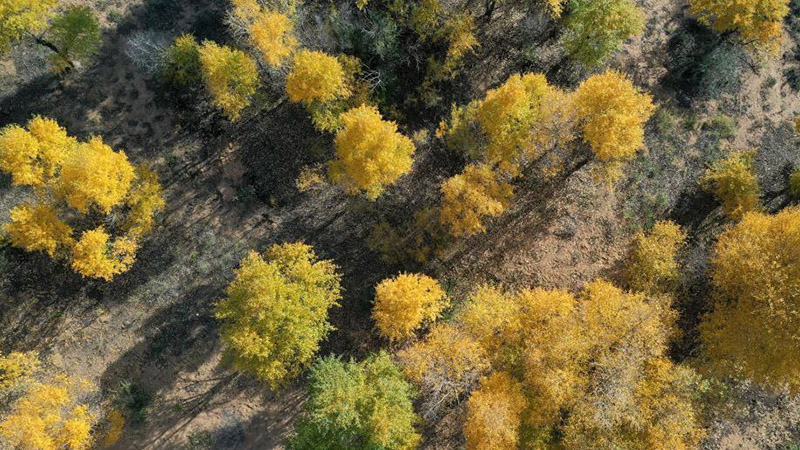 In pics: autumn scenery at Haba Lake nature reserve in Ningxia