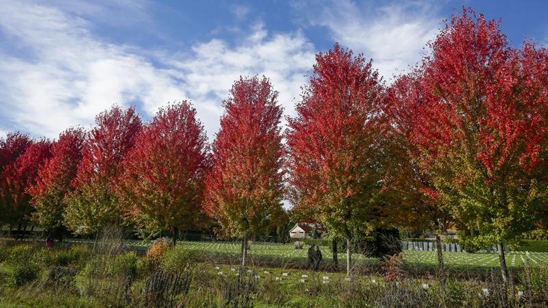 In pics: fall foliage in Vancouver, Canada