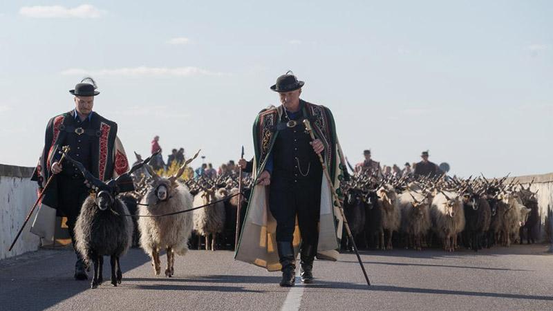 End of grazing season celebrated in Hortobagy, Hungary
