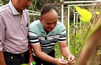 Ji Xuncong: guardian of Hainan's tropical crops