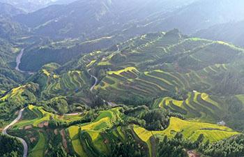 Scenery of terraced fields in Rongshui, China's Guangxi