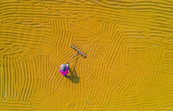 Farmers embrace harvest in Yuncheng City, Shanxi