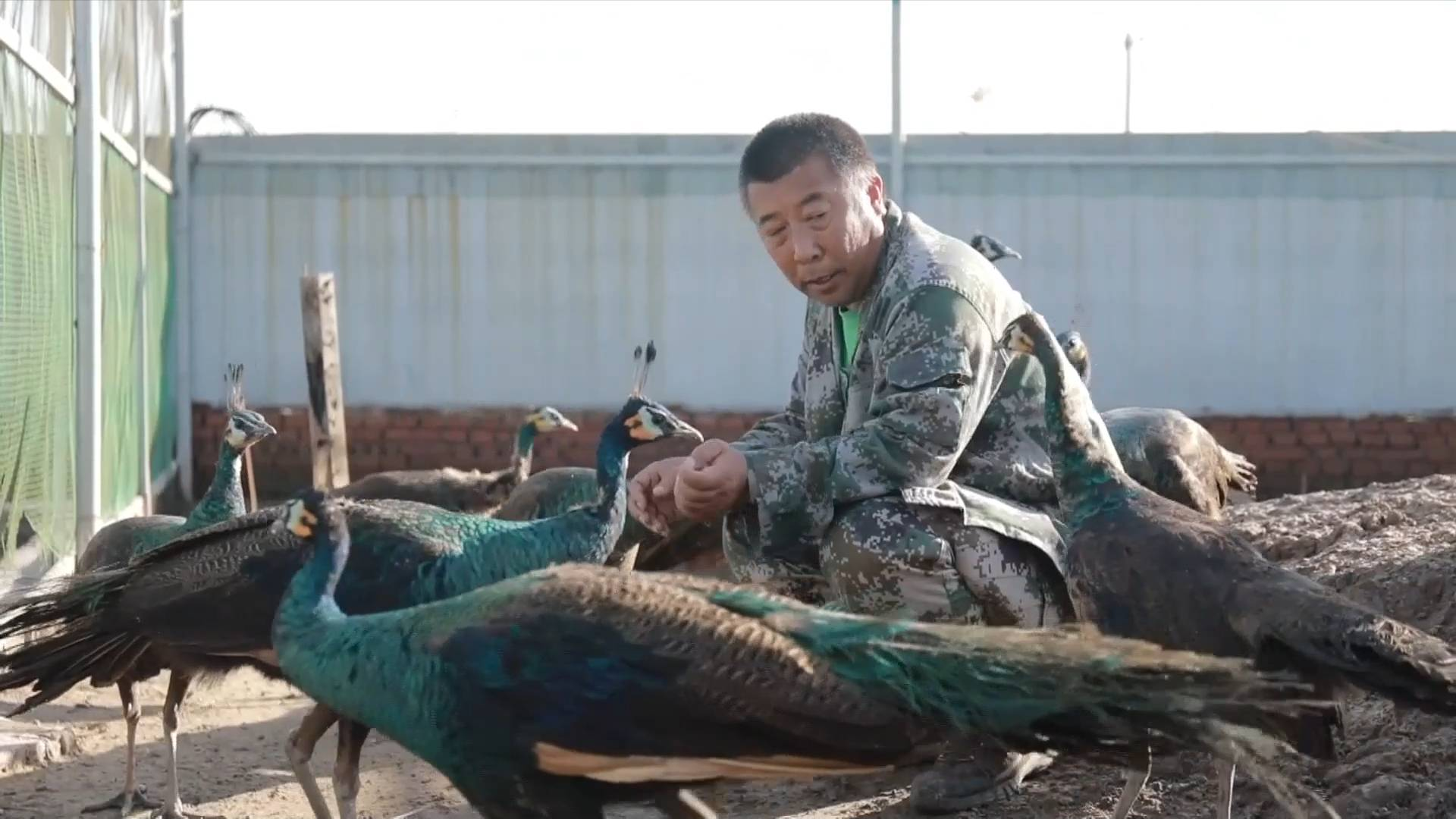 GLOBALink | Volunteer spends decade protecting migratory birds