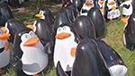 """""""企鵝展""""沒企鵝,你逗我呢?"""
