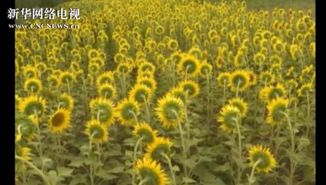 第九屆中國花博會落幕 超160萬人次觀展
