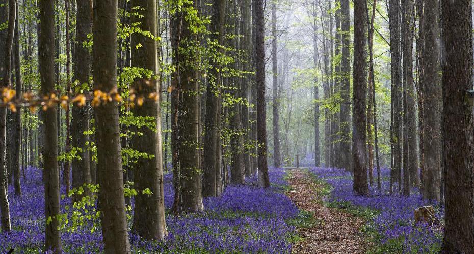 世界林業節遍賞各地美爆了的森林景觀