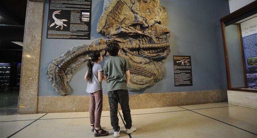 罕見的蛇頸龍骨架化石亮相阿根廷博物館