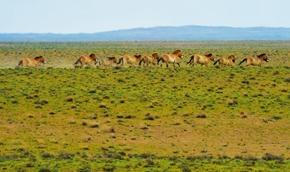 新疆卡拉麦里山 生态图卷