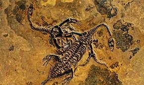2.1亿年前的海生爬行动物长什么样?