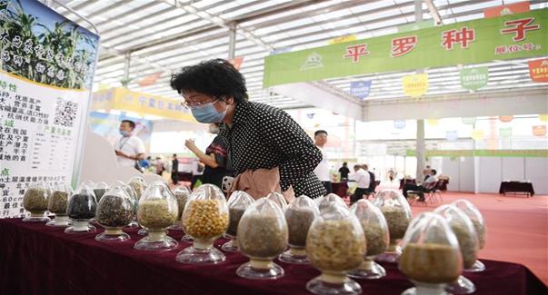 寧夏:種業博覽會助力鄉村振興