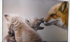 百余幅野生動物攝影作品在京展出