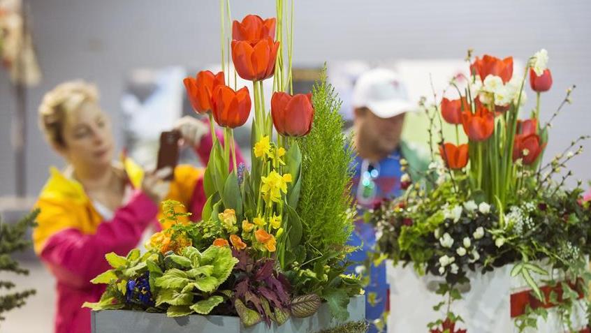加拿大花卉與園藝博覽會在多倫多舉行