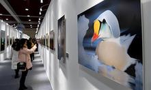 三門峽白天鵝·野生動物國際攝影大展開幕