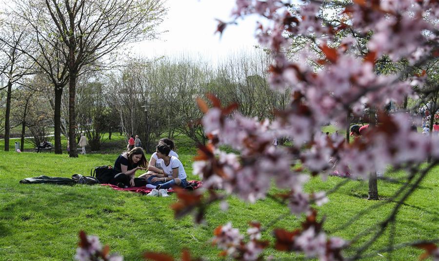 柏林舉辦第12屆櫻花節