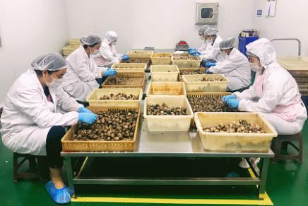小蒜頭撬動億元大産業 江蘇徐州全力打造出口食品質量安全示范區