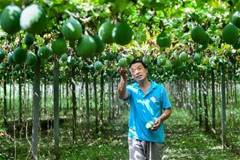 河南羅山:訂單式農業幫助群眾脫貧致富