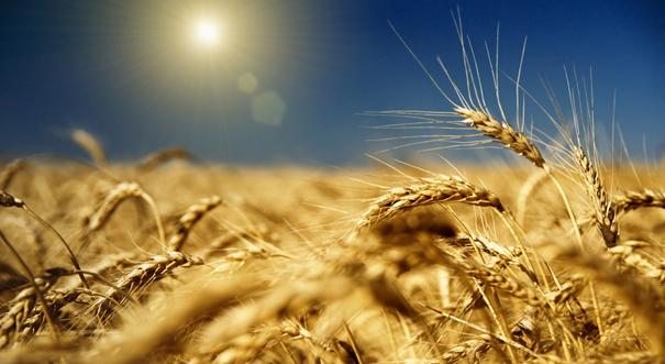 我國農産品連續5年監測合格率穩定在96%以上