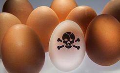 """""""毒雞蛋""""擊中歐盟監管機制弊端"""