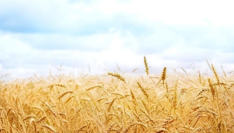 農産品供給如何確保國家糧食戰略安全?