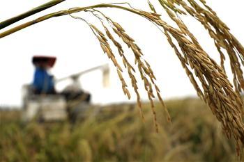 【高清圖集】今年我國糧食有望再獲豐收