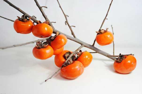螃蟹+柿子=腹瀉?科學解讀食物相克