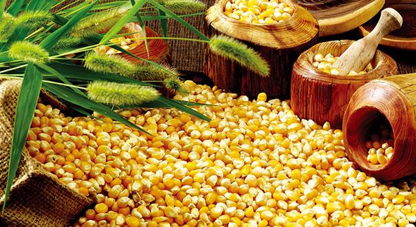 前三季度農業農村經濟穩中有進、穩中向好、穩中向優