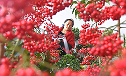 【高清圖集】春暖農事忙