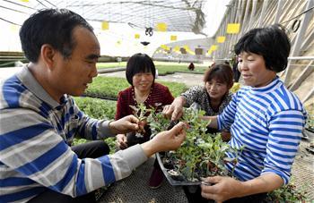 【高清圖集】北京:農業基地備耕忙
