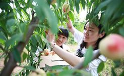 河北內丘:農旅融合助推鄉村發展
