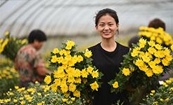 河北南和:高效特色農業助力鄉村振興