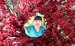河北樂亭:絹花出口促增收