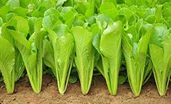 説説反季節蔬菜的營養與品質