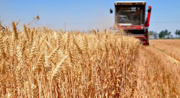韓長賦談夏糧收獲:夏糧不只是豐收 豐收的質量也有提升